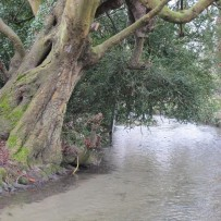 Go with the Flow: The story of Letcombe Brook